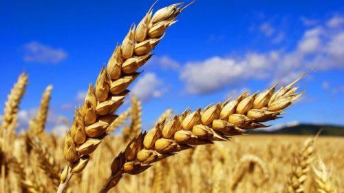 Четверть внешнеторгового оборота Украины формирует сельское хозяйство