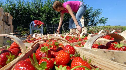 Названы самые популярные среди украинцев страны для сезонной работы