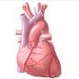 Мобильное приложение сможет предупредить сердечный приступ