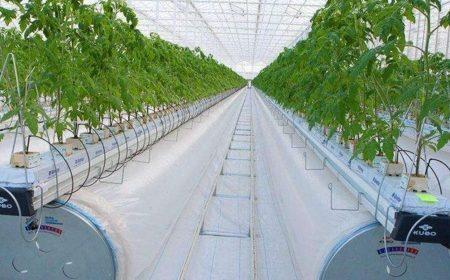 В Актобе началось строительство второй очереди теплицы пятого поколения