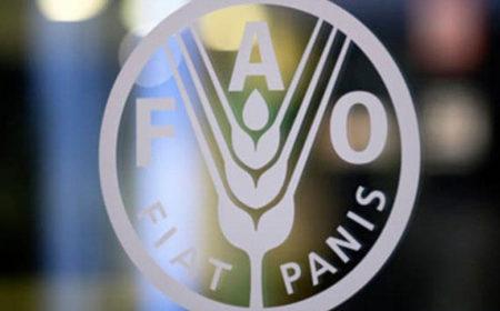 Мировые продовольственные цены достигли максимума за 2 года