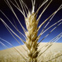 Наиболее прибыльные категории сельского хозяйства