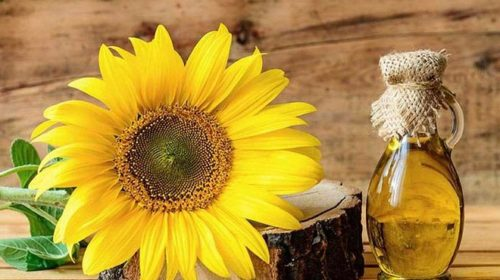 Украина увеличила объем экспорта подсолнечного масла почти на 60%