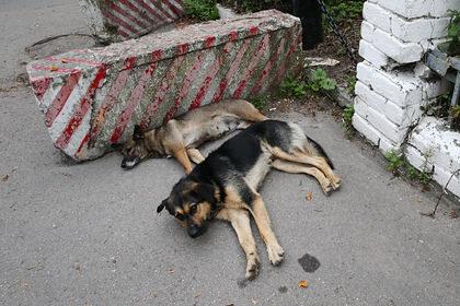 В российском регионе собрались ввести налог на собак