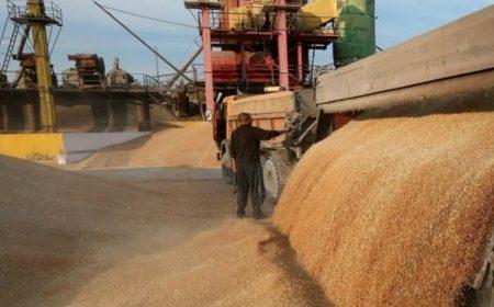 Казахстан рассчитывает экспортировать 8-9 млн тонн зерна